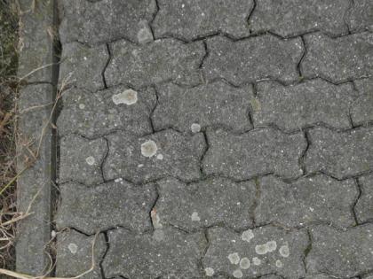 Odstranění řas a mechu, Chodník